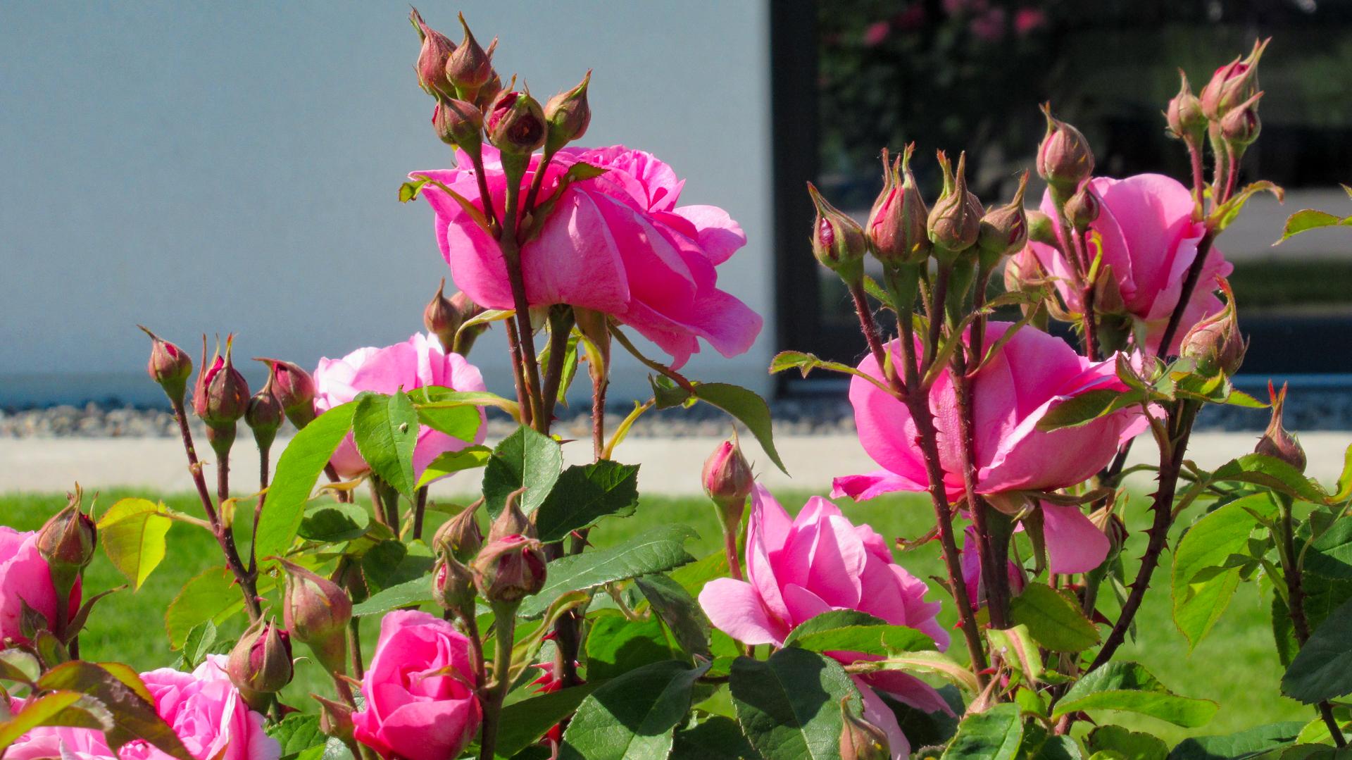 Pflanzen von Thome Gartengestaltung