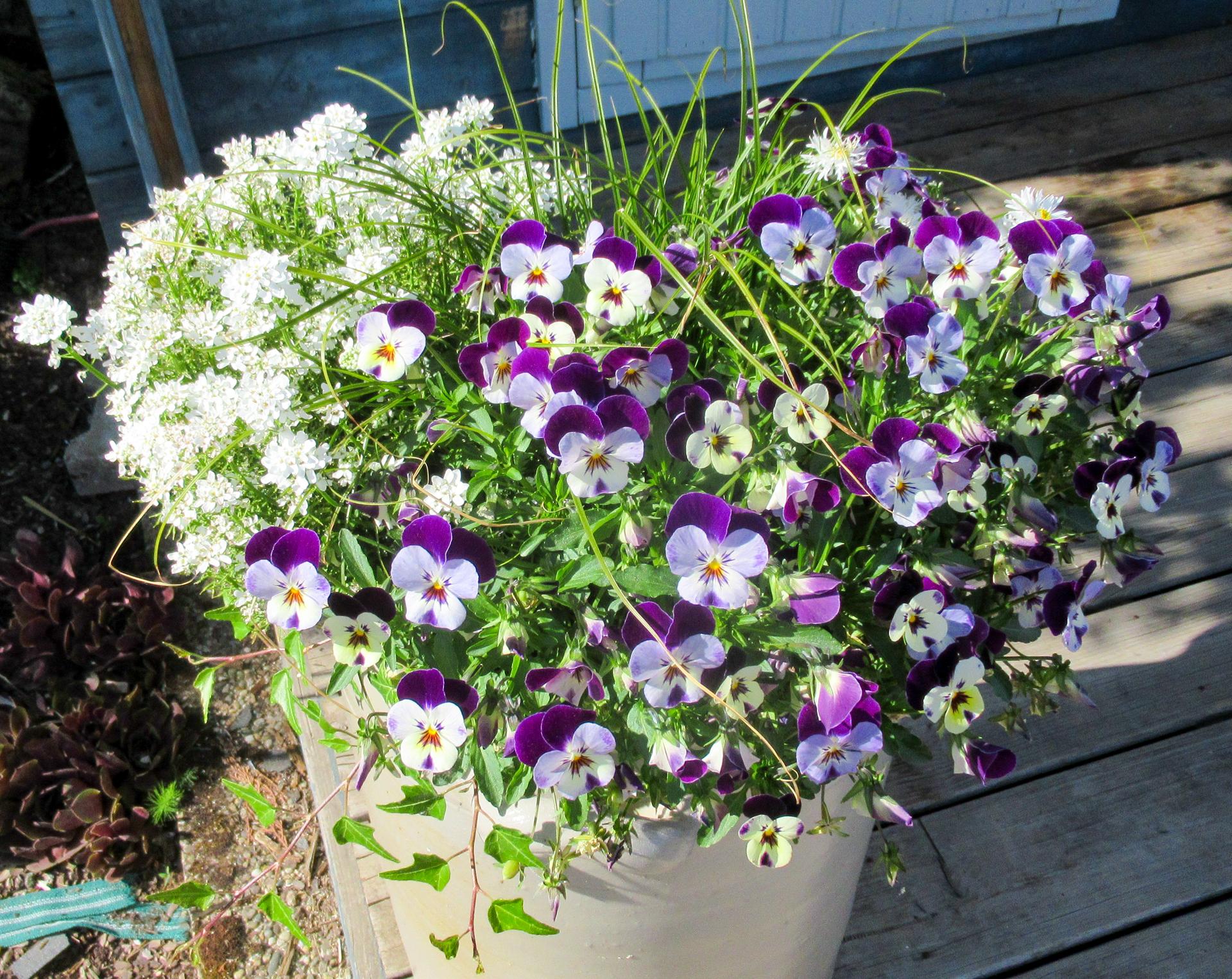 thome-galabau Blumen